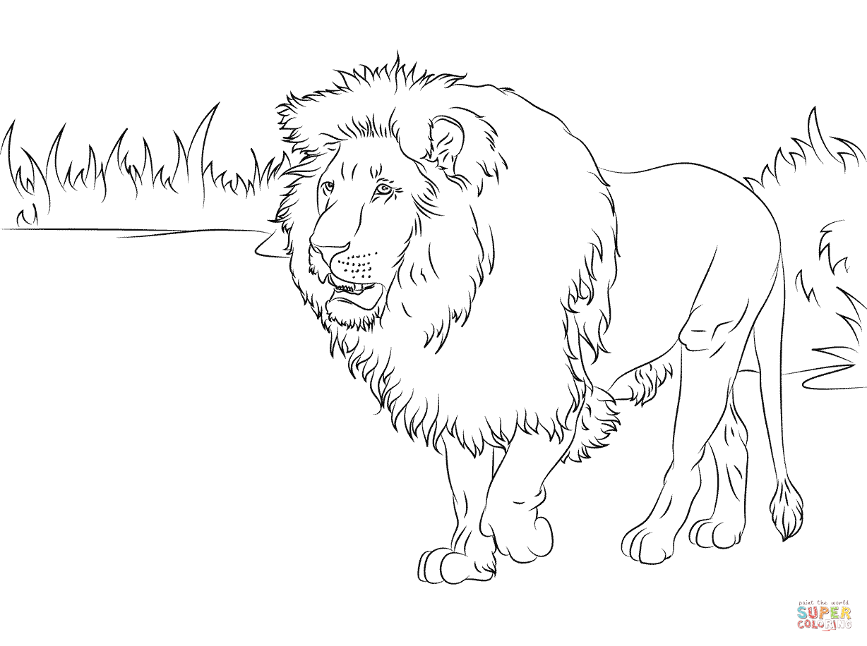 1228x916 Coloring Page Of Lion Cub Tags Coloring Page Of Lion How To Draw
