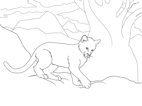 480x360 Cougar Cub Coloring Page Free Printable Coloring Pages