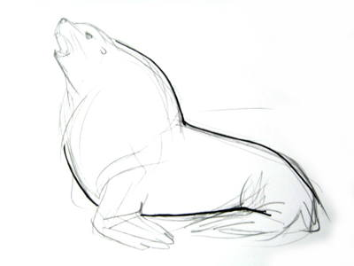 400x300 How to draw a Sea lion