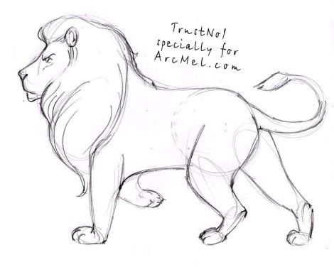 470x376 How to draw a lion step by step 4 Daniel e amigos. Pinterest