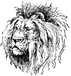 235x252 Lion Drawings Bold and Beautiful