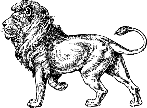 600x442 Walking Lion Drawing Clip Art
