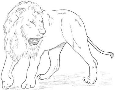 375x294 lion drawing for children