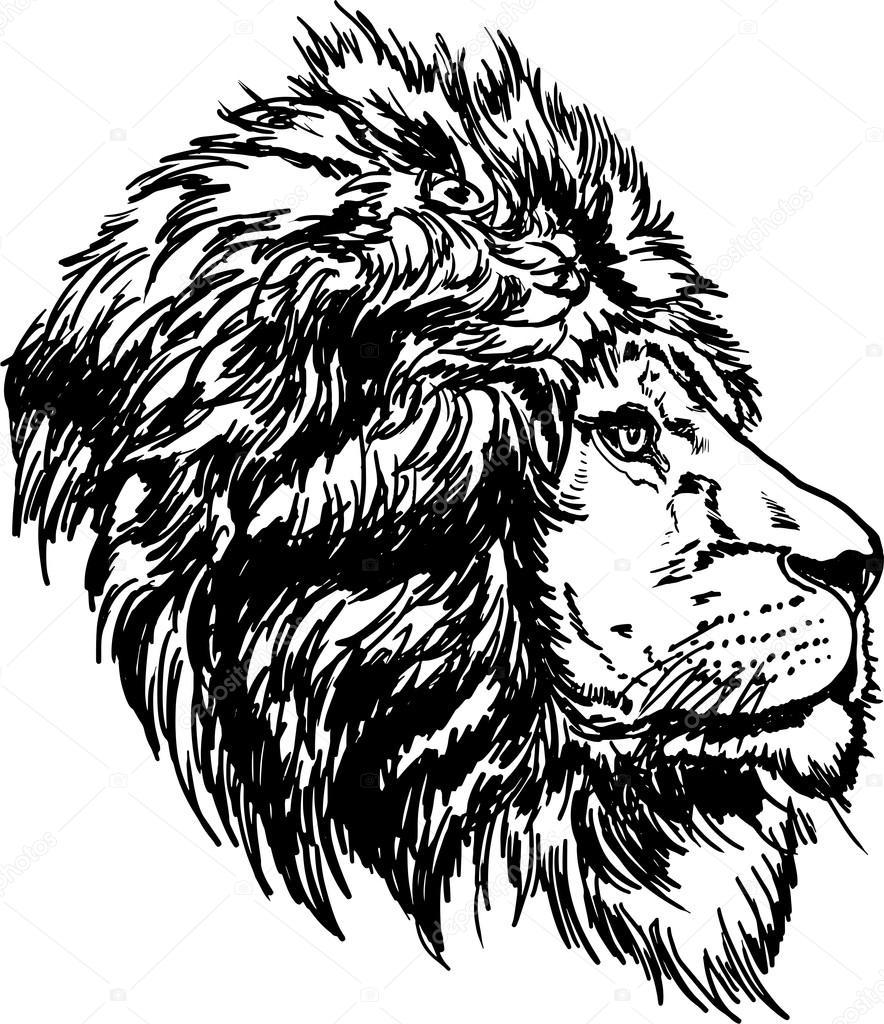 884x1024 Drawing Black And White Lion Head Stock Vector Galkajackdaw