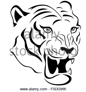 300x320 Tiger Head Vector Hand Drawing Illustration In Black And White