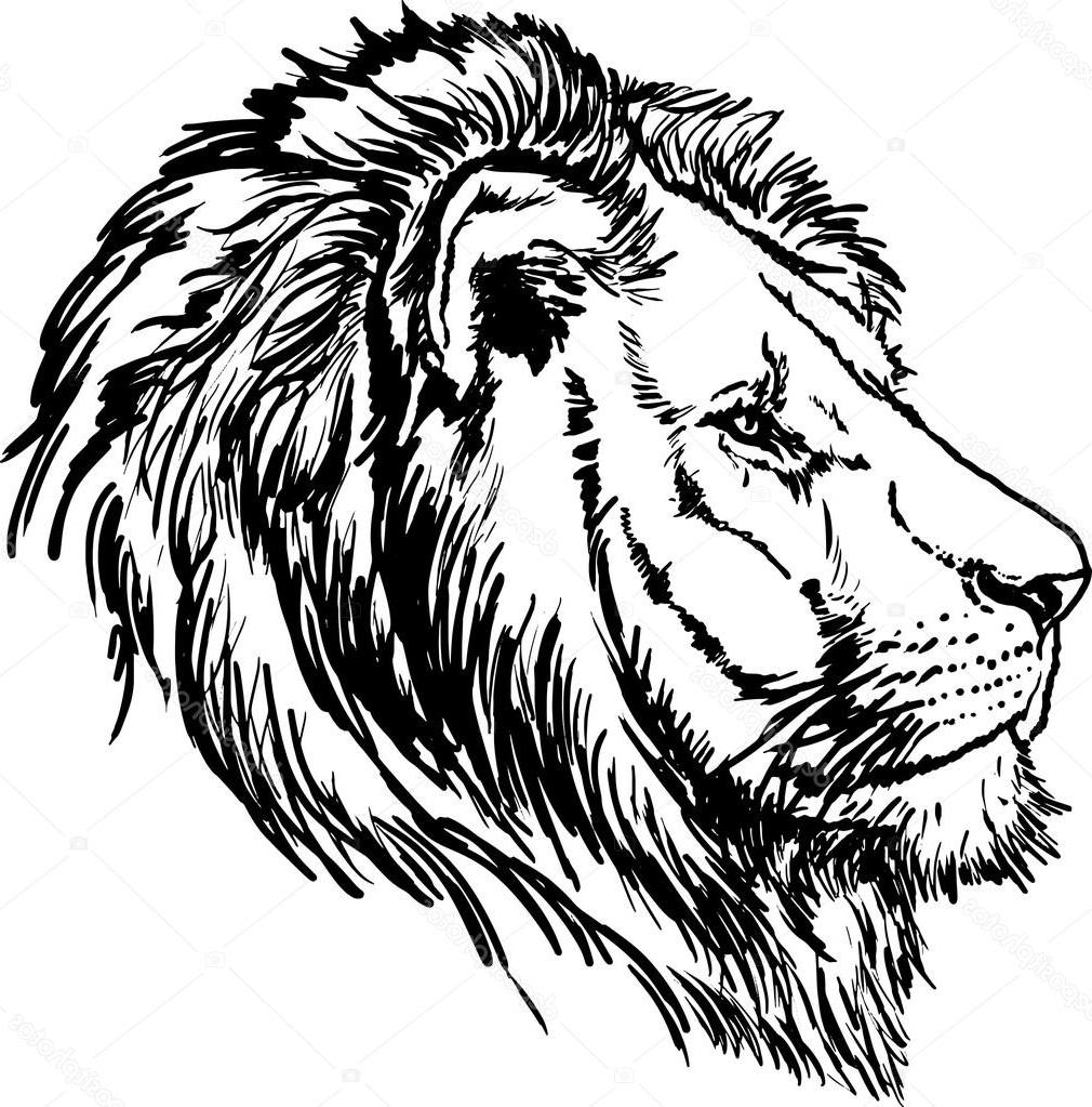 1010x1023 Unique Stock Illustration Drawing Black And White Lion