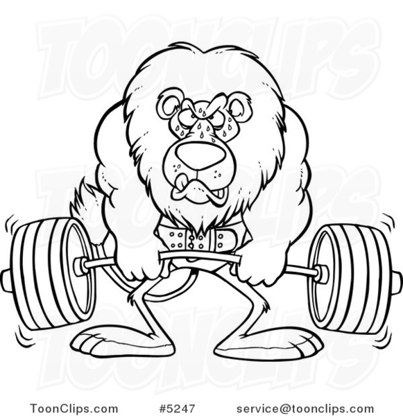 581x600 Cartoon Black And White Line Drawing Of A Lion Weightlifting