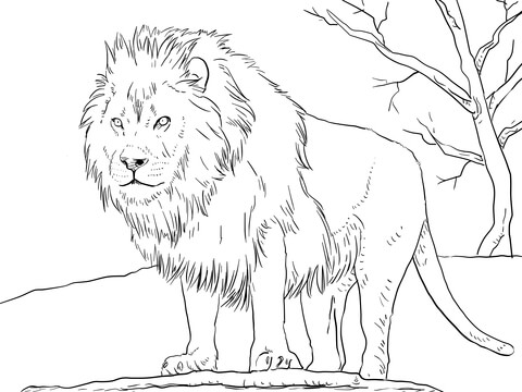480x360 African Lion Drawings African Lion Drawing Easy