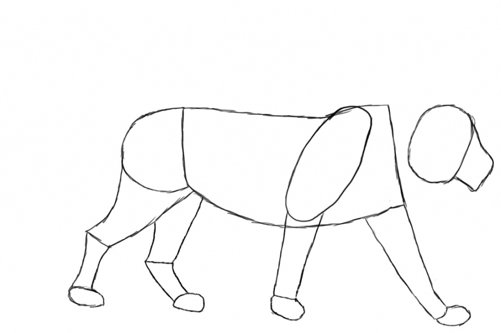 1024x682 How Draw A Lion Lion How To Draw A Lion Easy Step Step Youtube