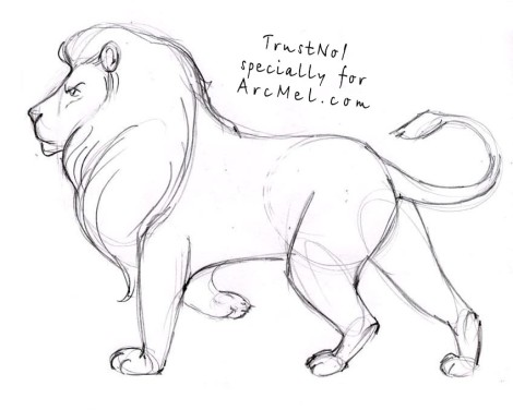 470x376 How To Draw A Lion Step By Step 4 Art Ideas And Tips