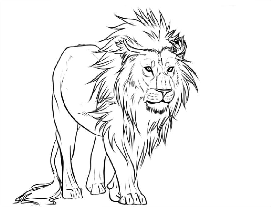 891x680 Drawings Lion