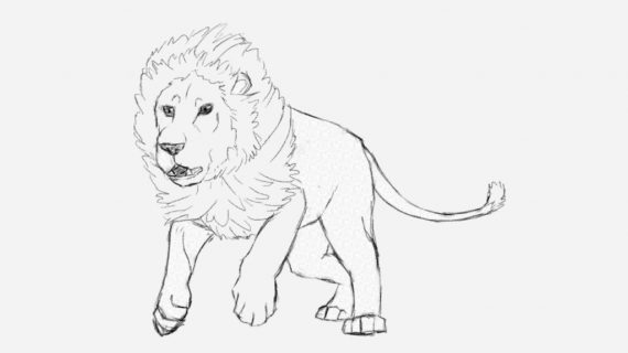 570x320 How To Draw A Lion Step By Step In Pencil How To Draw A Male Lion