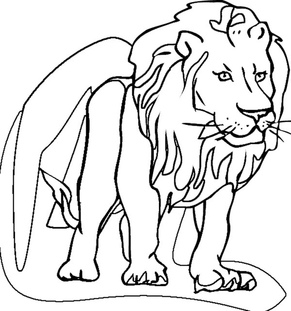 Lion Drawing For Kid at GetDrawings.com | Free for personal use Lion ...