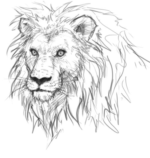 Lion Drawing Head