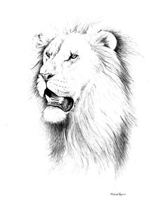 236x300 Lion Portrait Drawings