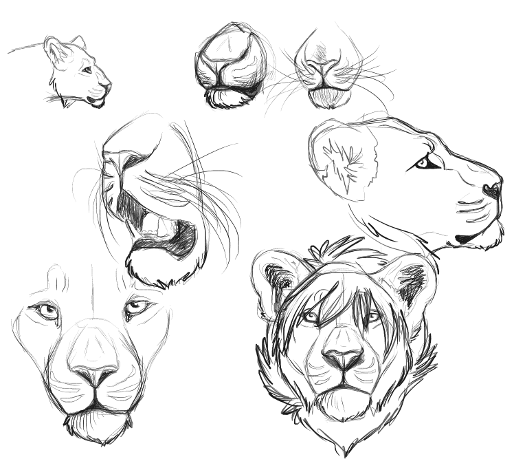 764x683 Lion Sketches By Xdoglate