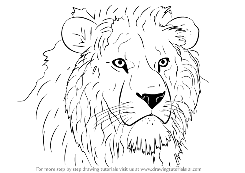 800x566 Learn How To Draw Lion Head (Big Cats) Step By Step Drawing