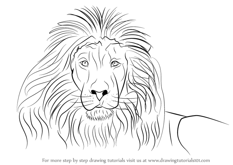 800x565 Learn How To Draw A Lion's Face (Big Cats) Step By Step Drawing