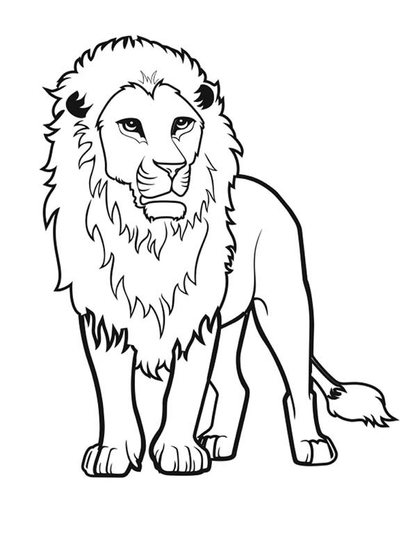 600x776 Awesome Lion Drawing Coloring Page Color Luna