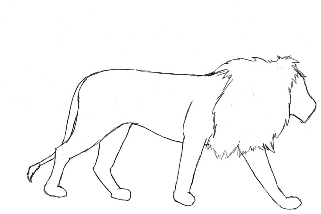 1024x682 Lion Drawing Outline How To Draw A Lion Draw Central