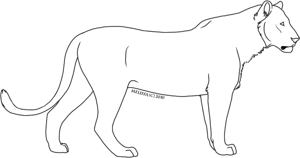 983x519 Lioness Clipart Black And White