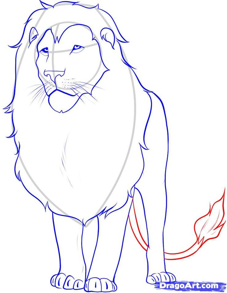 736x948 16 Best How Draw A Lion Images On Lion Painting,