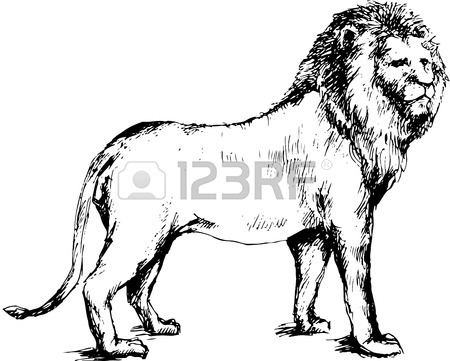 450x361 Lion Drawing Stock Photos. Royalty Free Business Images