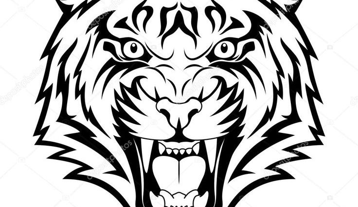 736x425 Tiger Images Drawings Best 25 Tiger Face Drawing Ideas