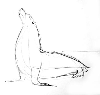 400x380 How To Draw A Sea Lion