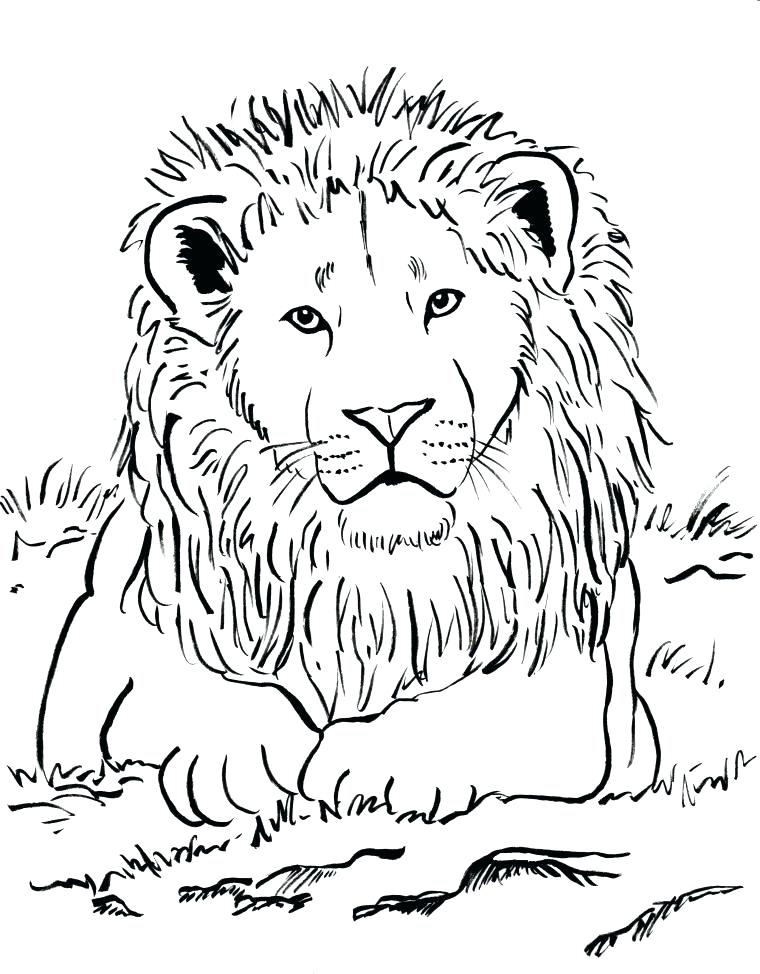 760x974 Simple Lion Coloring Pages Print Coloring Pages