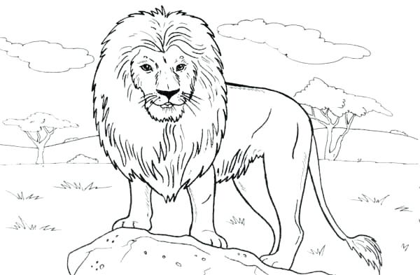 600x393 Simple Lion Coloring Pages Print Standing On A Rock Page Color