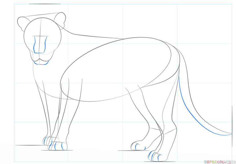 828x575 How To Draw A Lion Step By Step Drawing Tutorials