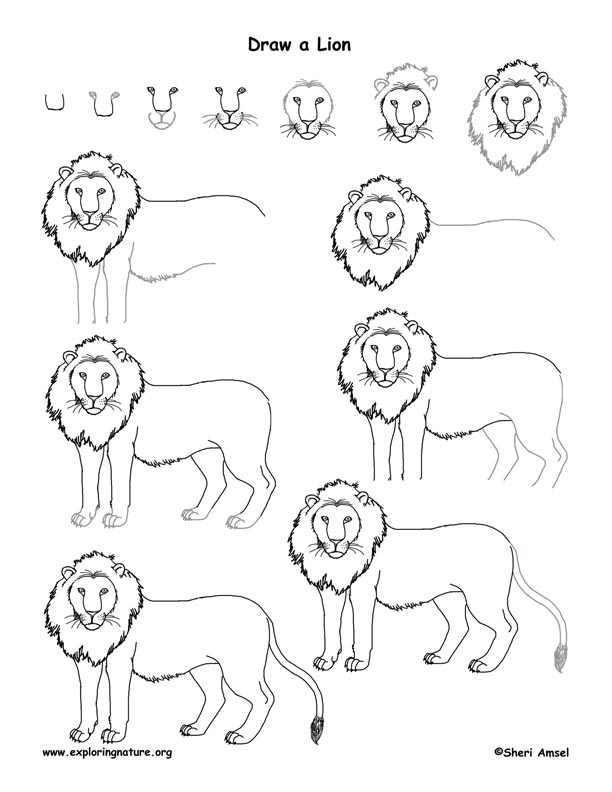 612x792 Lion Drawing For Kids Step By Step