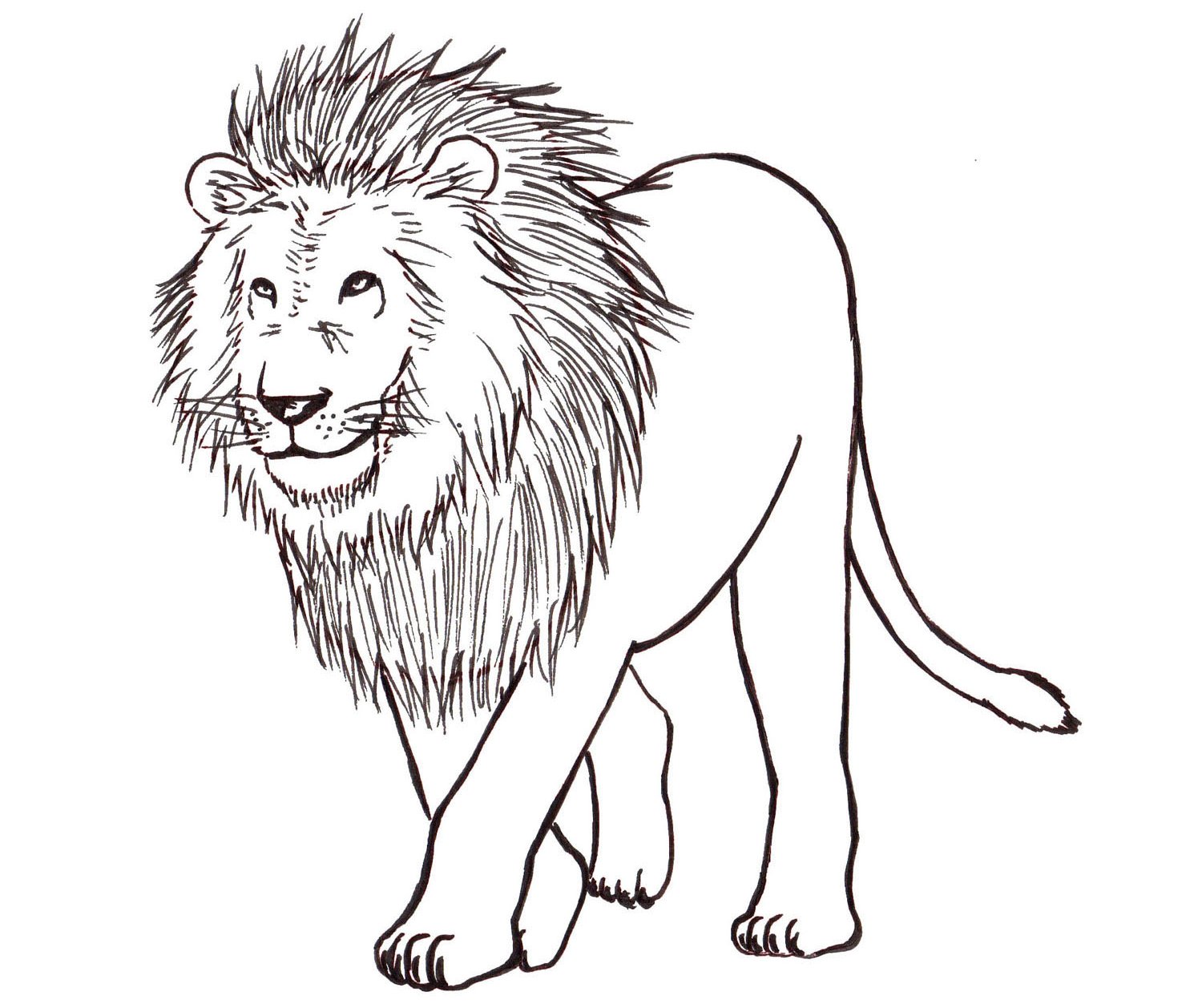 1500x1258 A Drawing Of A Lion How To Draw A Lion Step By Step