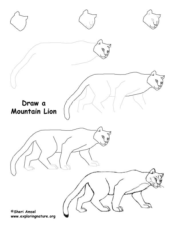 612x792 Lion Drawing Lesson