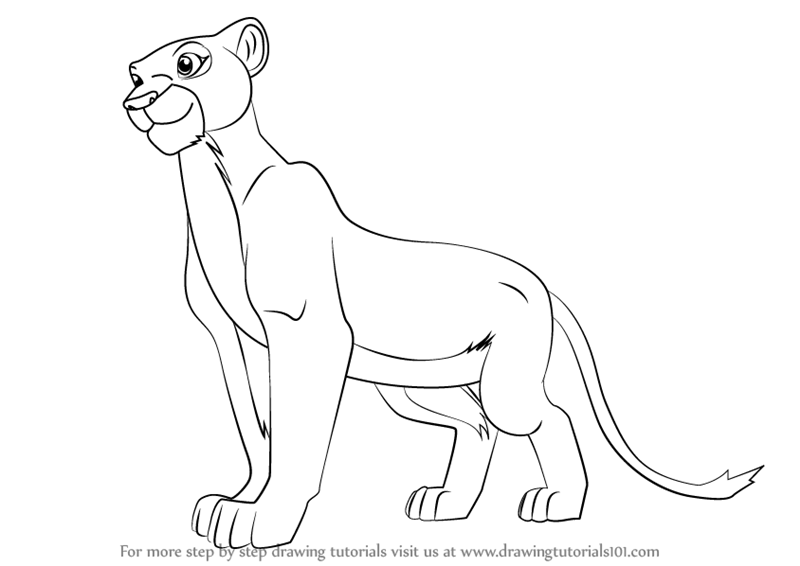 800x566 Step By Step How To Draw Nala From The Lion King