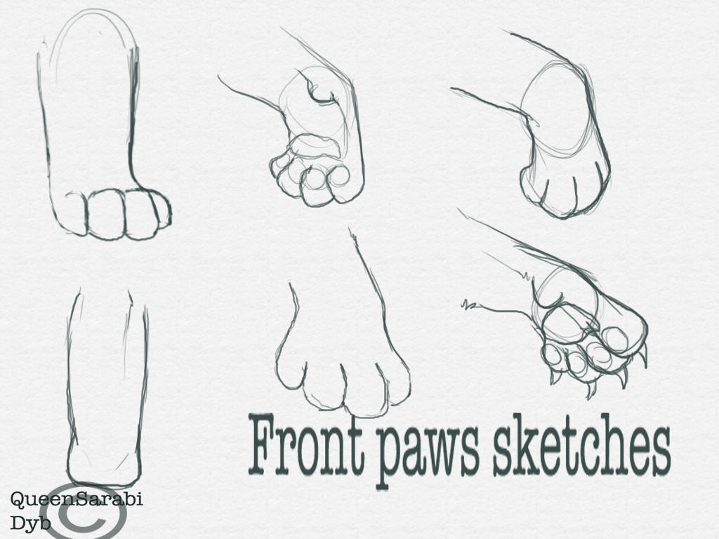 1024x768 Front Paws Sketches By Dyb