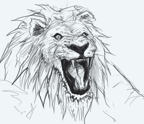 500x429 How To Draw A Lion's Head (Tutorial Video Included In Link) Artist