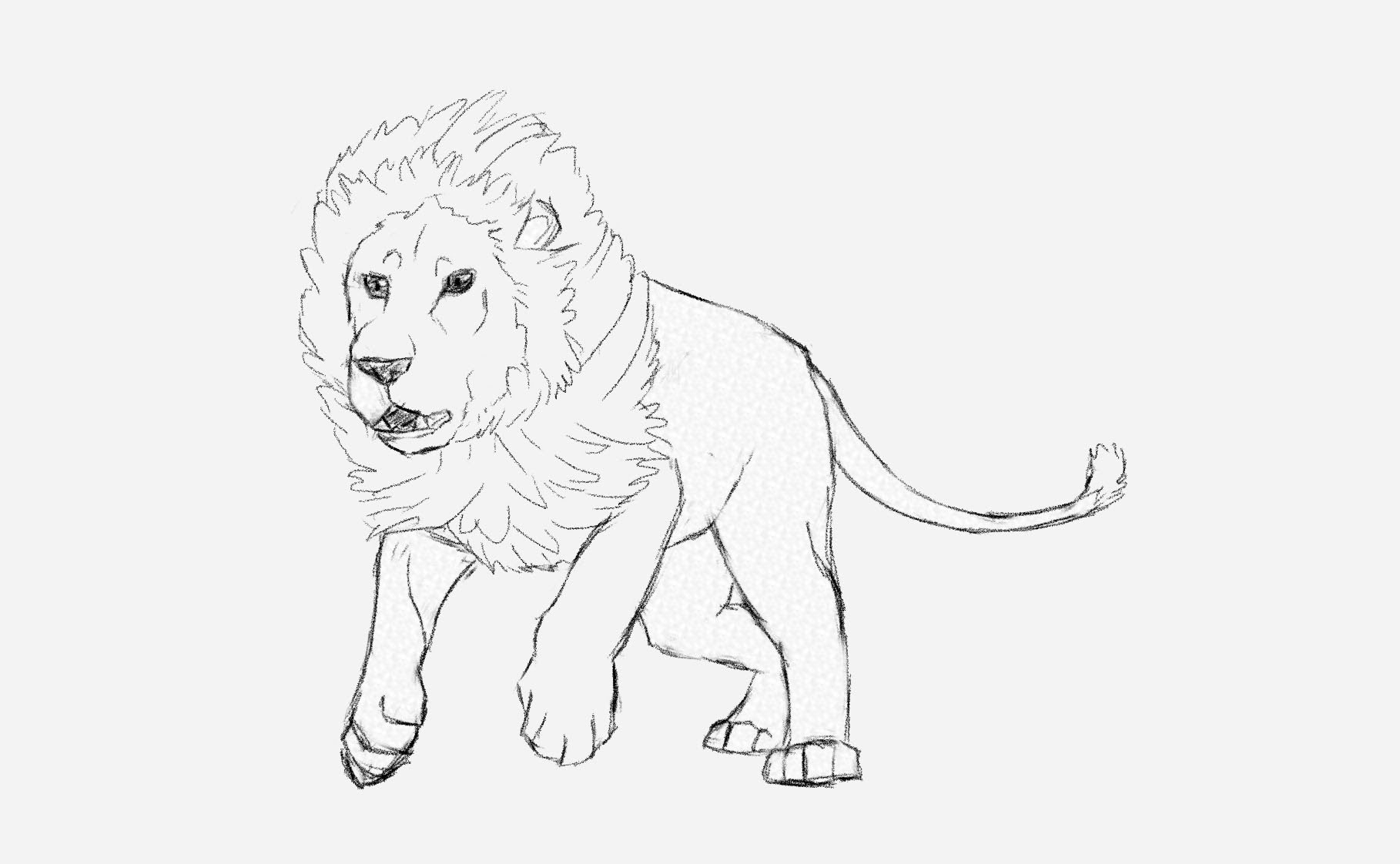 1818x1122 A Drawing Of A Lion How To Draw A Male Lion Running Art Tutorial