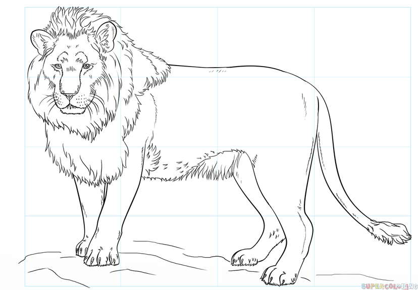 828x575 Lion Images For Drawing Allofpicts