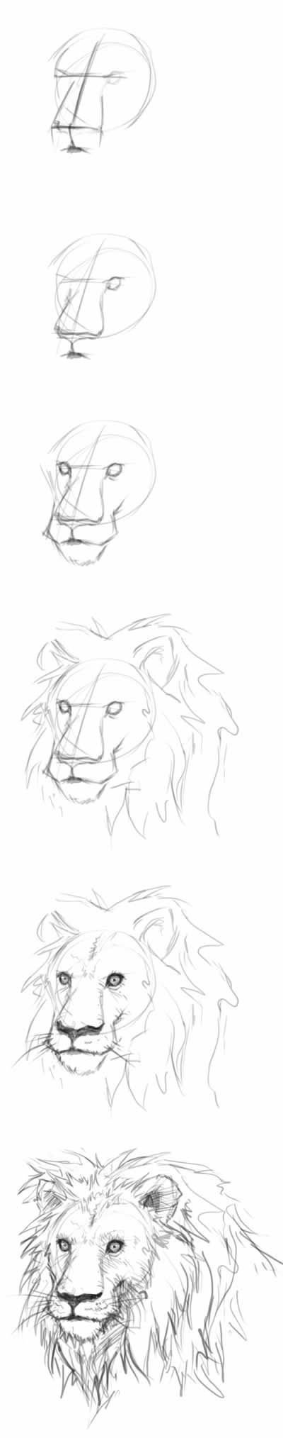 400x2028 How To Draw A Lion Head Step By Step