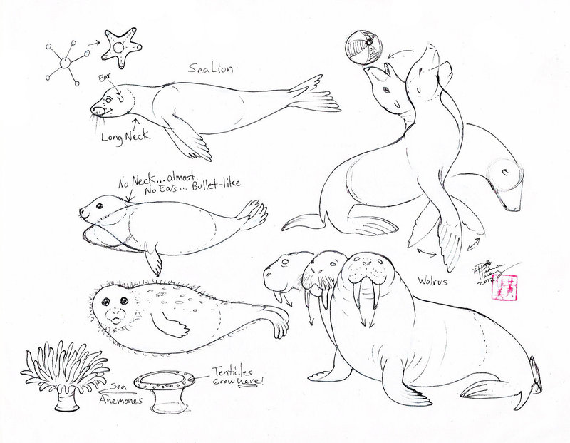 800x621 Draw Seals, Sea Lions And Walrus By Diana Huang