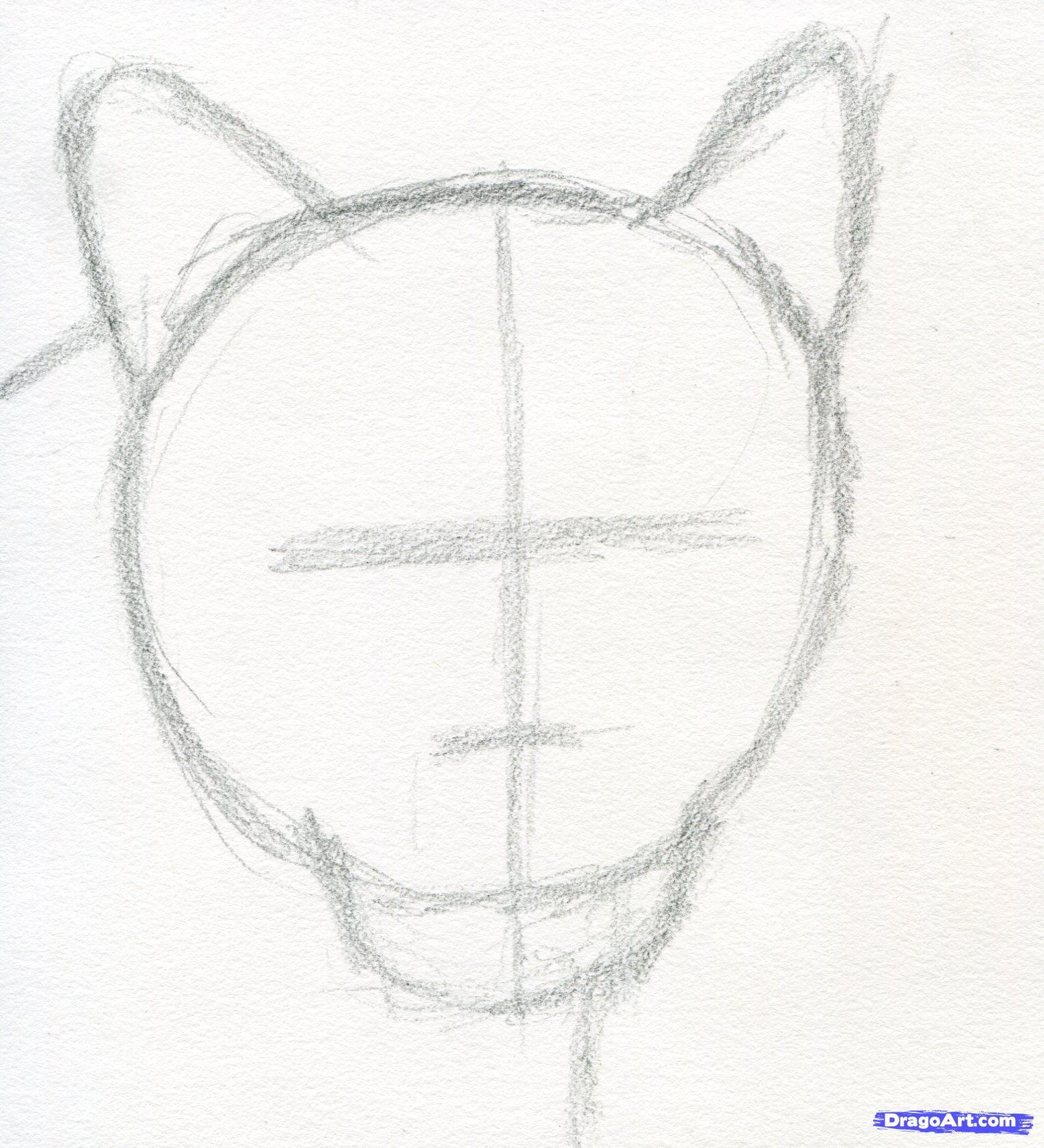 1527x1679 How To Draw A Realistic Puma, Mountain Lion Step 2 Art