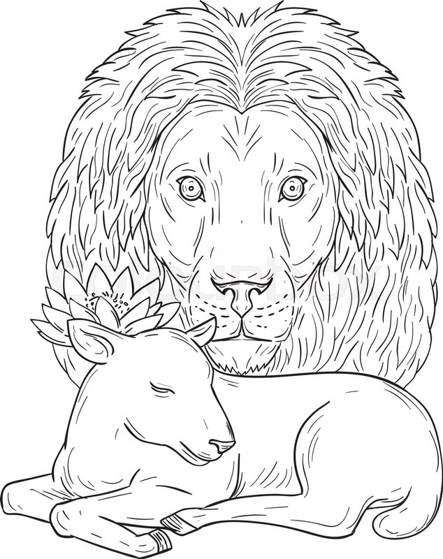 634x800 Drawing Sketch Style Illustration Of Lion Head Watching Over