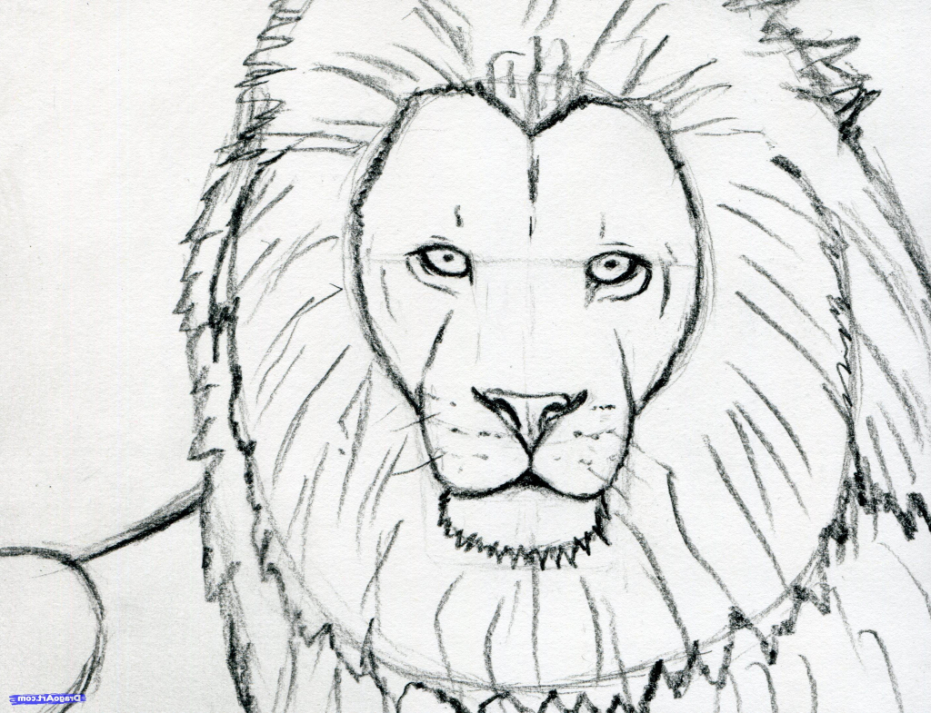 1024x785 Simple Lion Face Drawing Learn How To Sketch A Lion Safari Animals