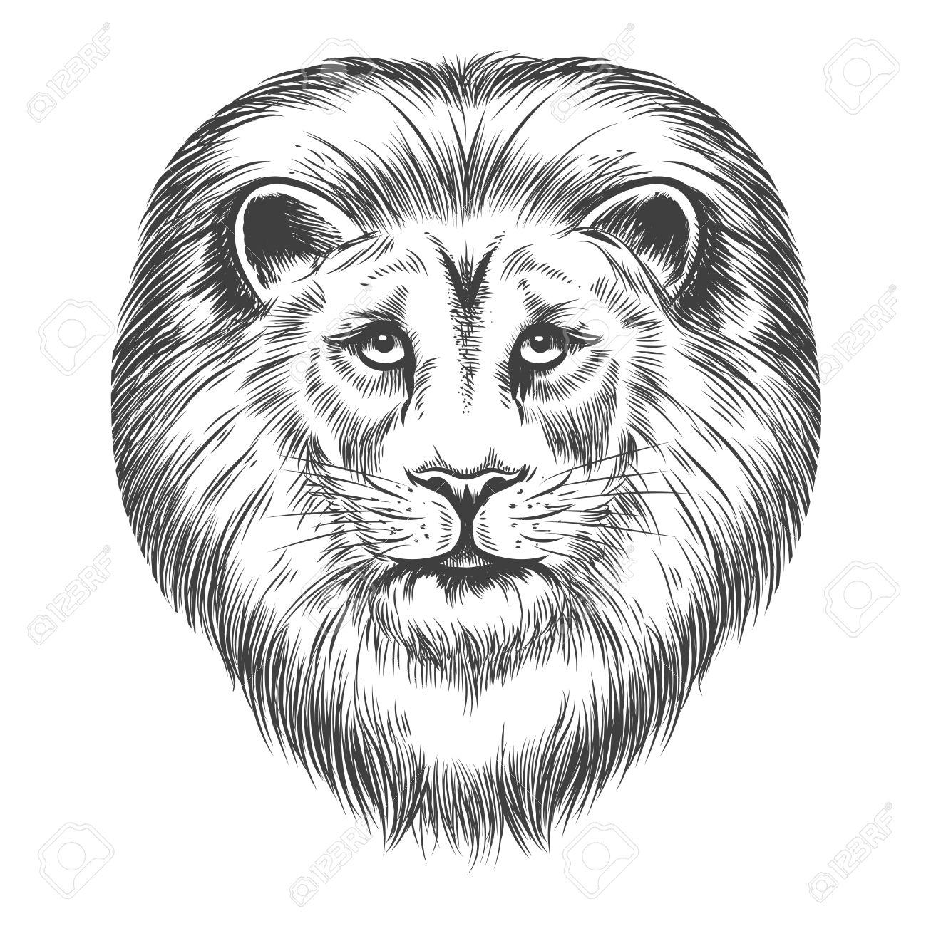 1299x1300 Drawn Sketch Lion Head