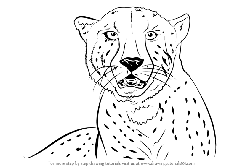 800x565 Learn How To Draw A Cheetah's Face (Big Cats) Step By Step