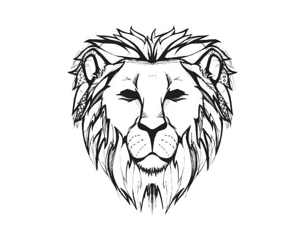 600x472 Lion Face Images For Drawing Wallpapergenk