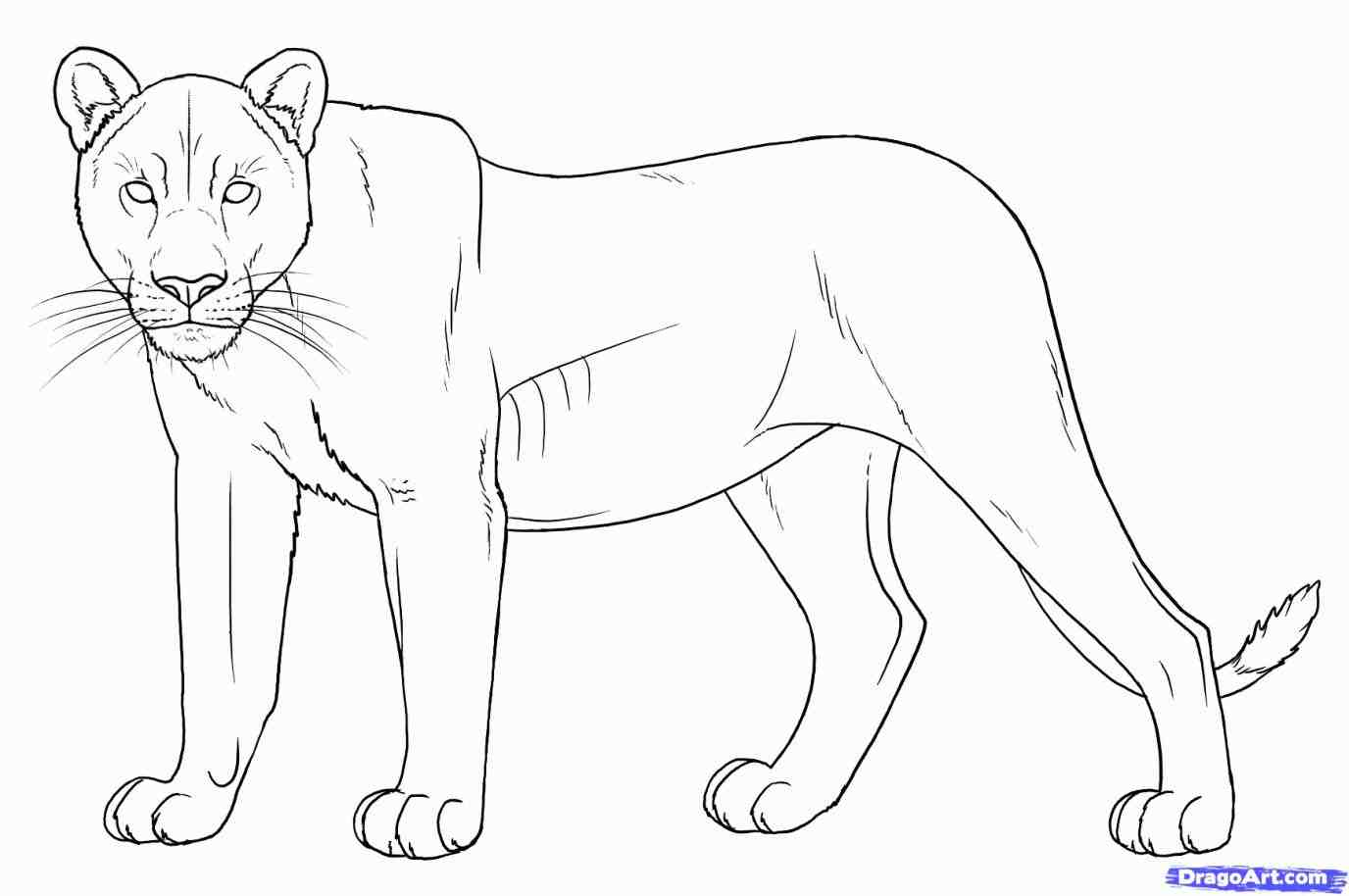 1376x914 How To Draw A Lion Head Step By Step Easy