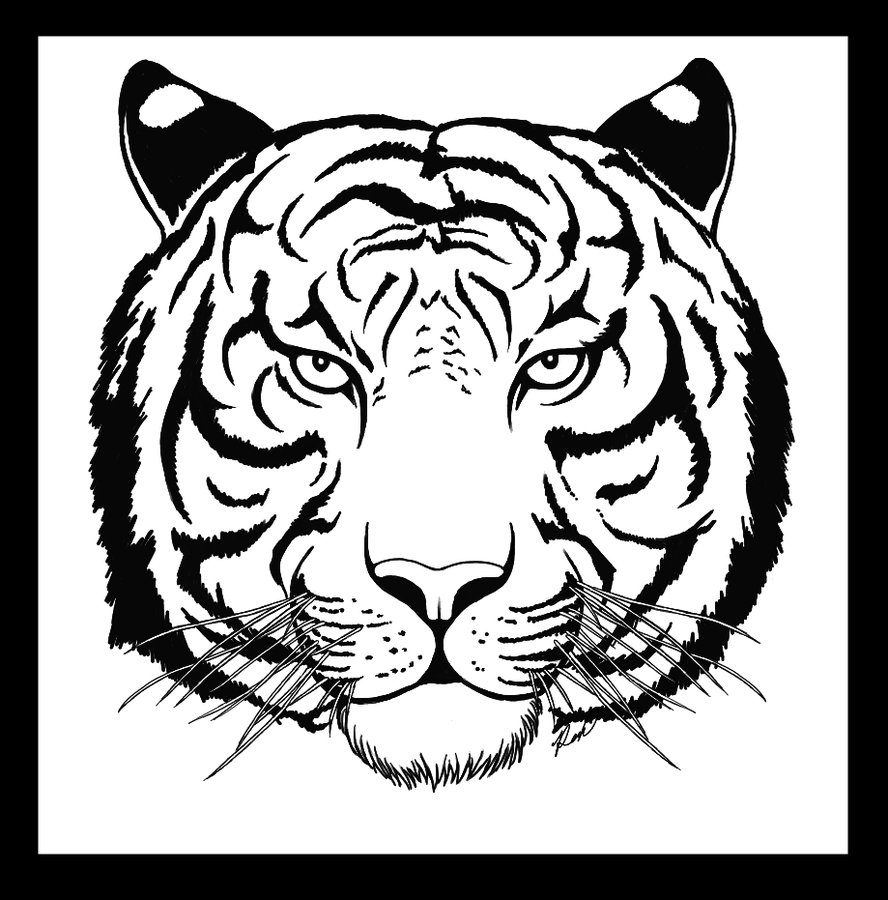 888x900 Images Tiger Face Line Drawing